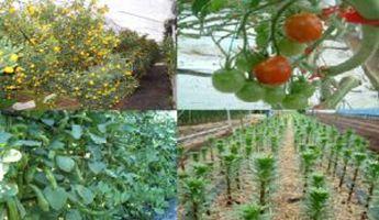 farm_photo01-300x174
